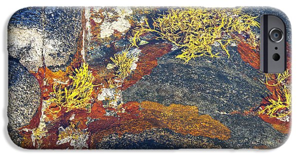 Alga iPhone Cases - Colors on rock II iPhone Case by Heiko Koehrer-Wagner