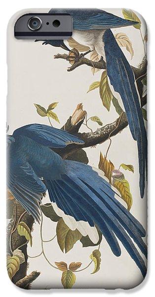Bluejay iPhone Cases - Columbia Jay iPhone Case by John James Audubon