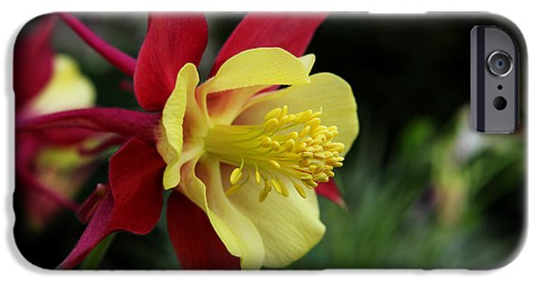 Meadow Photographs iPhone Cases - Columbine iPhone Case by Judy Vincent