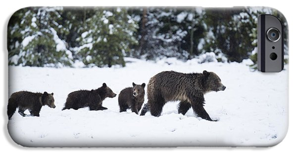 United States iPhone Cases - Come Along - Grizzly Family iPhone Case by Sandra Bronstein