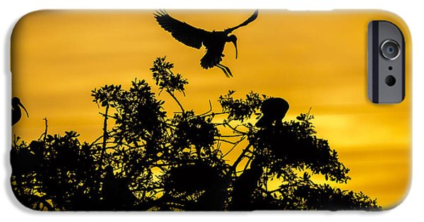 Roosting iPhone Cases - Coming Home iPhone Case by Mike Lang