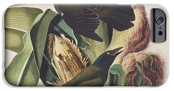 Crows Drawings iPhone Cases - Common Crow iPhone Case by John James Audubon