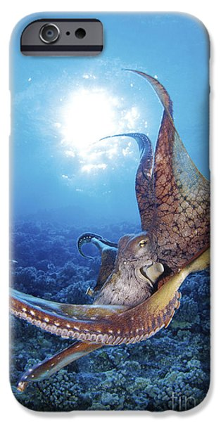 Jet-propelled iPhone Cases - Common Cuttlefish iPhone Case by Dave Fleetham - Printscapes