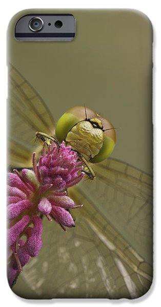 Common Darter Dragonfly iPhone Case by Andy Astbury