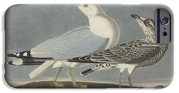 Seagull Drawings iPhone Cases - Common Gull iPhone Case by John James Audubon