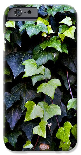 Helix iPhone Cases - Common ivy iPhone Case by Fabrizio Troiani