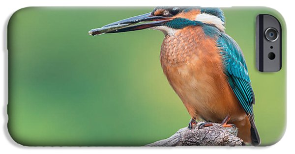 Fauna iPhone Cases - Common Kingfisher Catched The Fish iPhone Case by Sergey Ryzhkov