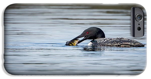 Loon iPhone Cases - Common Loon iPhone Case by Bill Wakeley