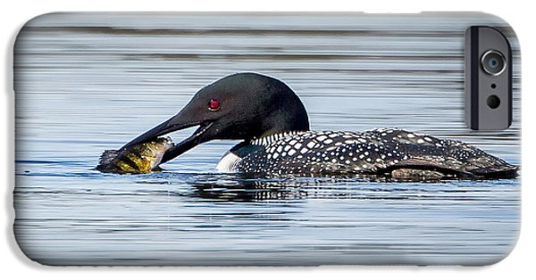 Loon iPhone Cases - Common Loon Square iPhone Case by Bill Wakeley