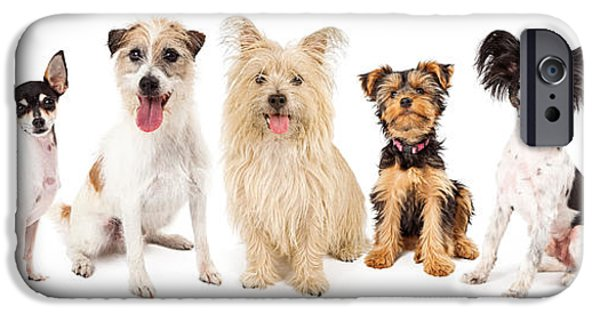 Jack Russell iPhone Cases - Common Small Breed Dogs iPhone Case by Susan  Schmitz