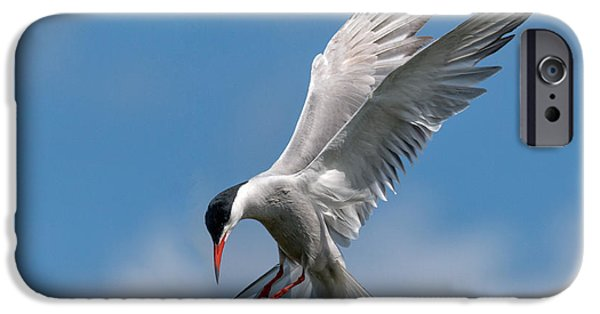 Hovering iPhone Cases - Common Tern  iPhone Case by Ian Hufton