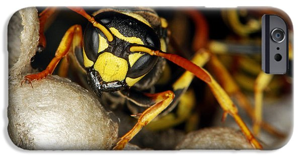 Hornets Nest iPhone Cases - Common Wasp Vespula Vulgaris iPhone Case by Gerard Lacz
