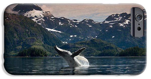 World No. 1 iPhone Cases - Composite Breaching Humpback Whale iPhone Case by Daryl Pederson