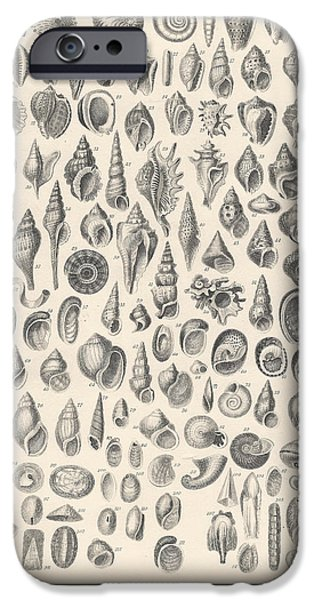 Botanical Drawings iPhone Cases - Conchology iPhone Case by Captn Brown