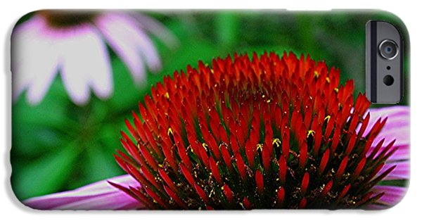 Abstracted Coneflowers iPhone Cases - Coneflowers iPhone Case by Juergen Roth