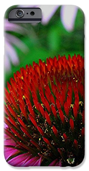 Coneflowers iPhone Case by Juergen Roth