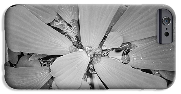 Nature Abstract iPhone Cases - Conservatory Nature in Black and White 1 iPhone Case by Carol Groenen