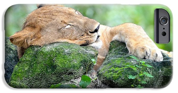 One iPhone Cases - Contented Sleeping Lion iPhone Case by Richard Bryce and Family