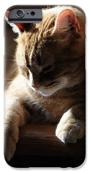 Orange Tabby iPhone Cases - Contentment iPhone Case by Renee Forth-Fukumoto