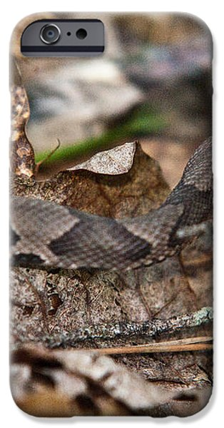 Copperhead 4 iPhone Case by Douglas Barnett