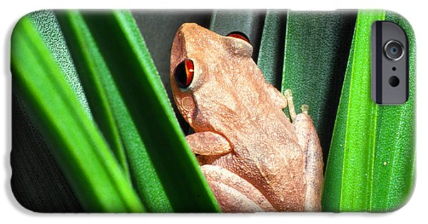 Bromeliad iPhone Cases - Coqui in Bromeliad iPhone Case by Thomas R Fletcher