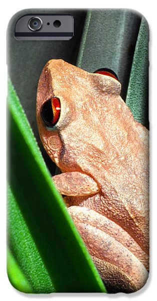Coqui in Bromeliad iPhone Case by Thomas R Fletcher