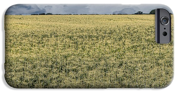 Crops iPhone Cases - Corn Field and Clouds iPhone Case by Patti Deters