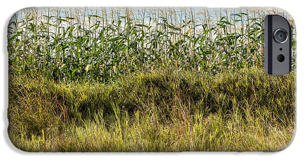 Crops iPhone Cases - Corn Field Cross-section iPhone Case by Patti Deters