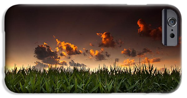 Crops iPhone Cases - Corn Sunset iPhone Case by Cale Best