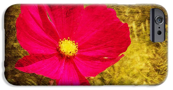 Flora Mixed Media iPhone Cases - Cosmos bipinnatus iPhone Case by Angela Doelling AD DESIGN Photo and PhotoArt