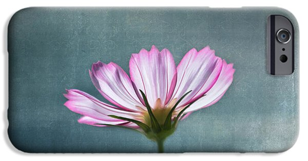 Flower Gardens Photographs iPhone Cases - Cosmos - Summer Love iPhone Case by Kim Hojnacki