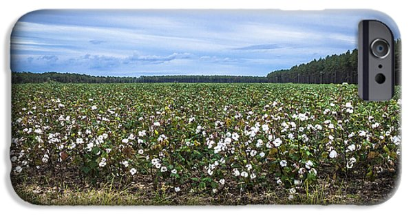 Crops iPhone Cases - Cotton Fields  iPhone Case by Debra Forand
