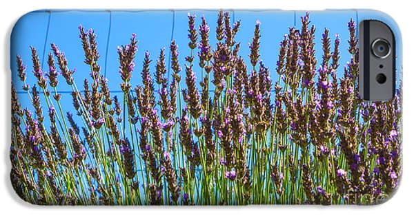 Rural Mixed Media iPhone Cases - Country Lavender III iPhone Case by Shari Warren