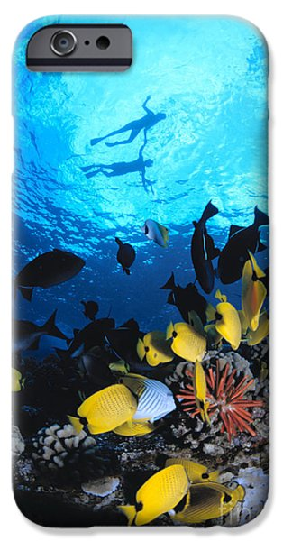 Couple Snorkels At Surfac iPhone Case by Ed Robinson - Printscapes