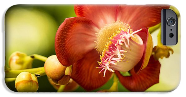 Close Up Floral Pyrography iPhone Cases - Couroupita Guianensis Flower iPhone Case by Eyzen M Kim