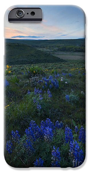 Yakima Valley iPhone Cases - Cowiche Wildflower Sunset iPhone Case by Mike Dawson