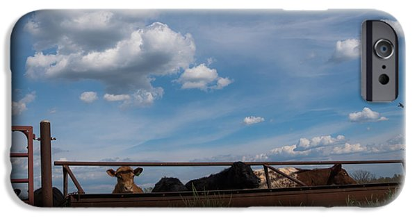 Barn Swallow iPhone Cases - Cows on the Farm iPhone Case by Jan Holden