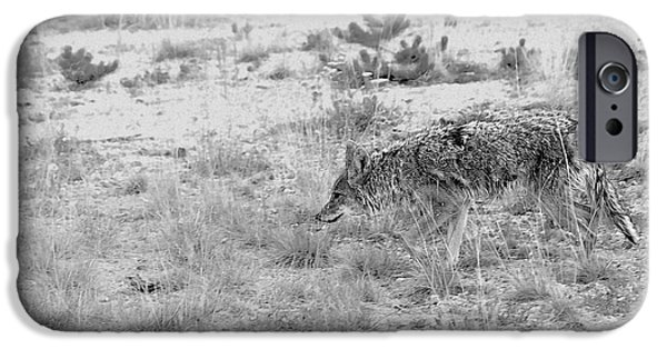 Coyote Art iPhone Cases - Coyote blending in iPhone Case by Christine Till