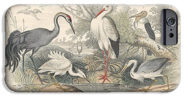 Antiques Drawings iPhone Cases - Cranes iPhone Case by Oliver Goldsmith