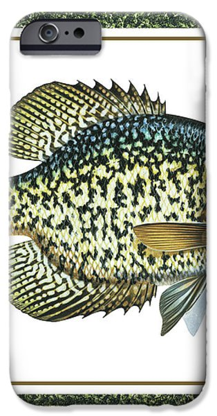 Crappie Print iPhone Case by JQ Licensing