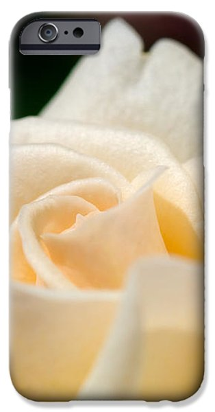 Cream Rose Kisses iPhone Case by Lisa Knechtel