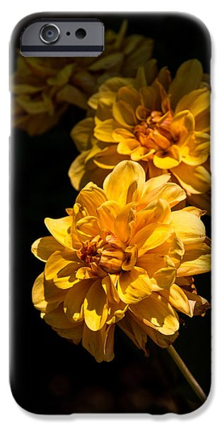 Sears Tower iPhone Cases - Crescent of Gold Dahlias iPhone Case by Fiona Craig