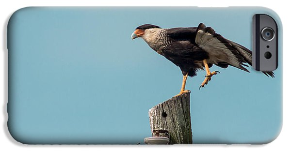 Cabin Window iPhone Cases - Crested Caracara iPhone Case by Robert Frederick