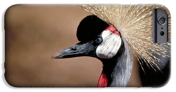 Male iPhone Cases - Crested Crane iPhone Case by Carl Purcell