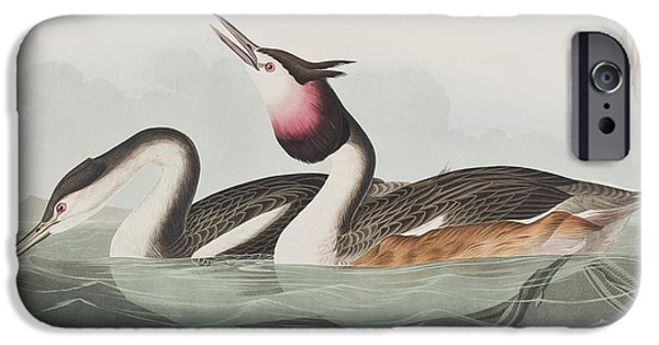 Beach iPhone Cases - Crested Grebe iPhone Case by John James Audubon