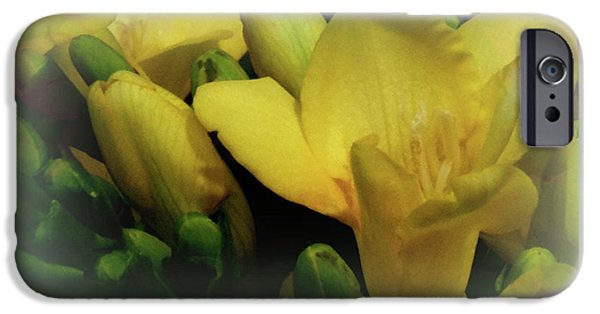 Sign iPhone Cases - Crocus Garden iPhone Case by Debra     Vatalaro
