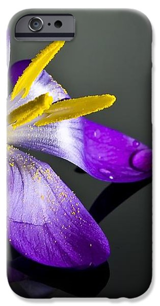 Crocus iPhone Case by Svetlana Sewell