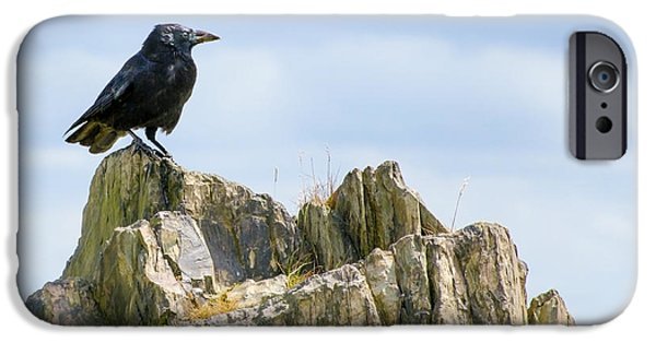 Crows iPhone Cases - Crow On The Rocks iPhone Case by Linsey Williams