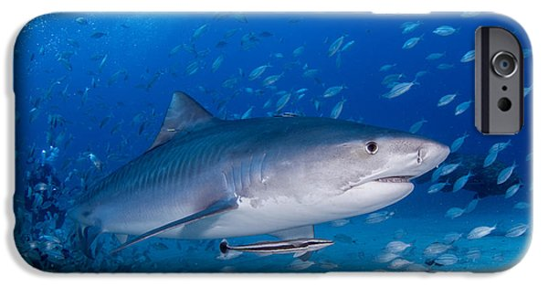 Shark Pyrography iPhone Cases - Cruising In The Blue iPhone Case by Ricardo  Ramos