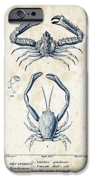 Crab iPhone Cases - Crustaceans - 1825 - 01 iPhone Case by Aged Pixel